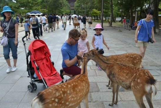 The deers at Nara with kids