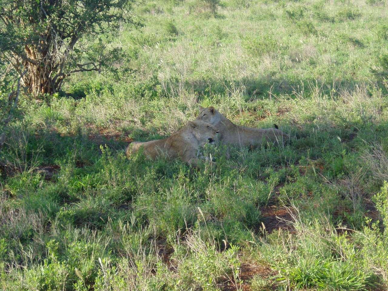 Tsavo national park safari