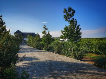 Retreat in Romanian wine regions and best of Romanian wineries: Ceptura Dealu Mare