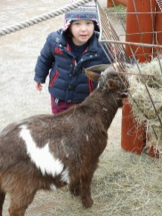 Chessington for toddlers - goats