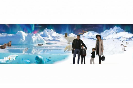 London Aquarium Christmas - Penguin present pursuit