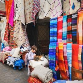 Cats of Medina Essaouira