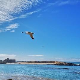 Mogador island - Atlantic Ocean