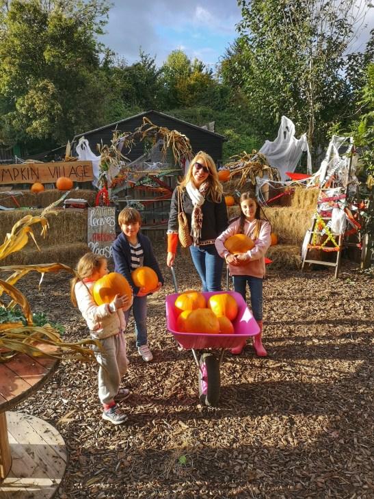 October 2020 pumpkin treats with Bocketts Farm Park