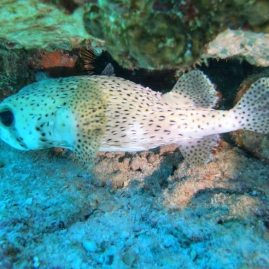 Snorkelling Petite Anse Seychelles