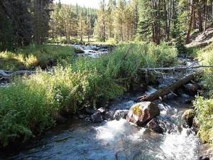 High mountain stream.