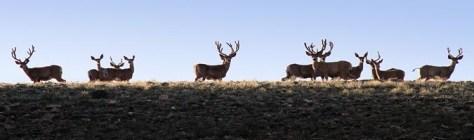 deer_skyline