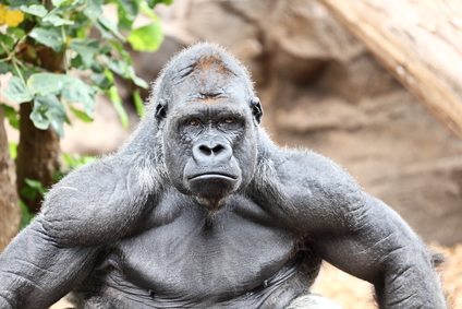 power gorilla