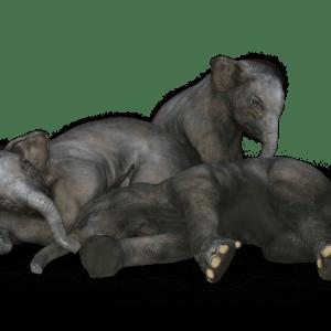 Famille elephant'