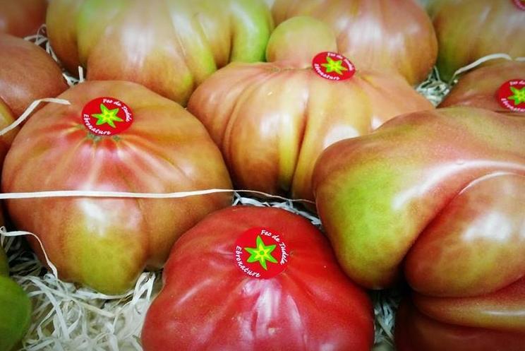 Tomate rosa de la huerta Navarra