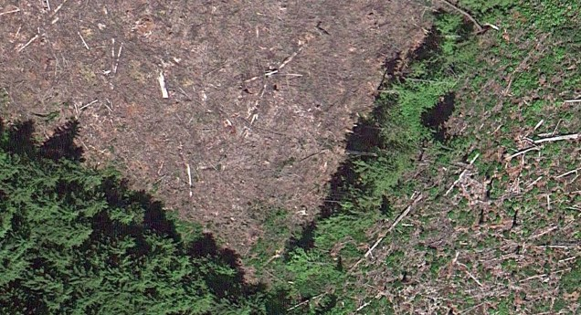 Detail of clear cut area and an area just a year old. Imagery ©2014 DigitalGlobe, Landstat, State of Oregon, USDA Farm Service Agency. Map Data ©2014 Google.