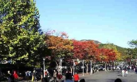 Oh Man, Autumn