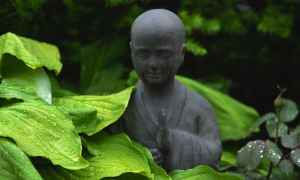 Buddha green Leaves
