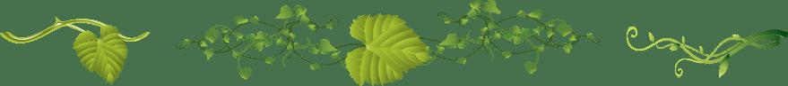 Leaves Separator