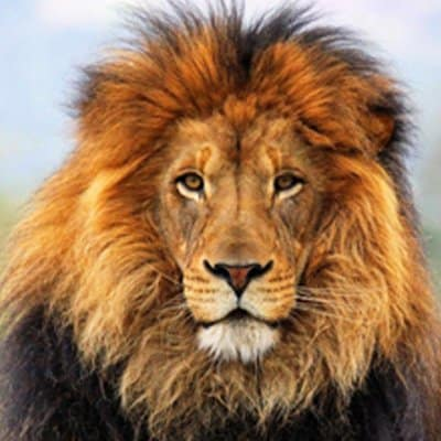 Find Your Alpha & Discover Confidence Unstoppable Self Confidence Hypnosis MP3 Audio