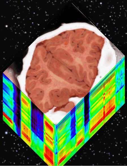 Your Brain has Limited Bandwidth (michael plishka 2009)
