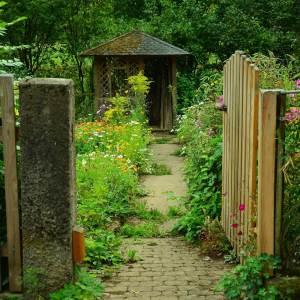 natural koans as dharma gates