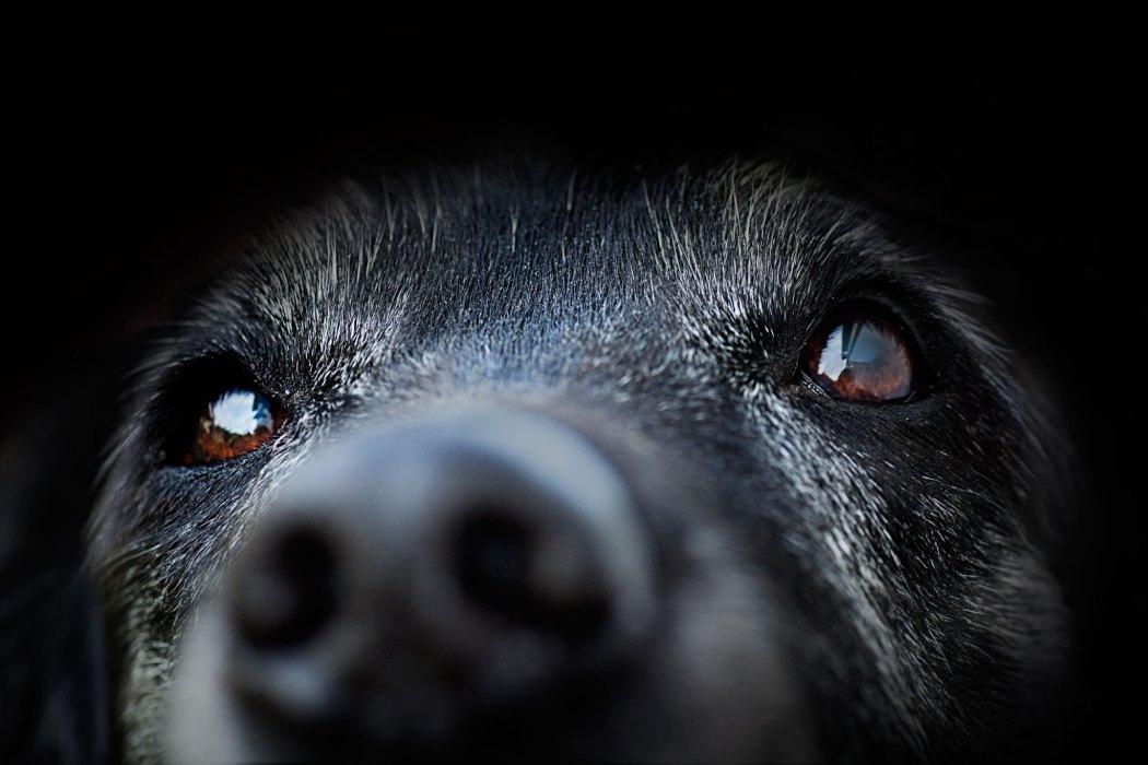 Mammatumore beim Hund