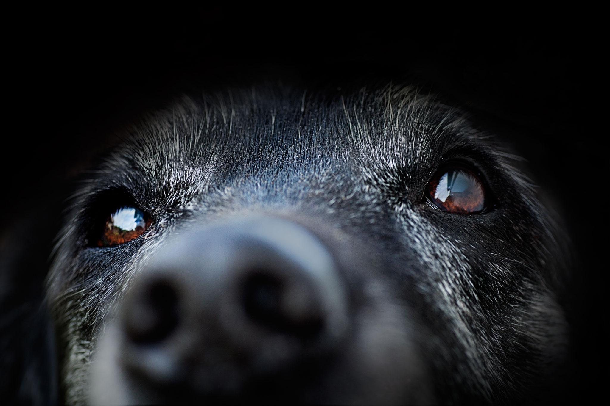 Beweglichen unter knubbel haut hund hat Hund hat