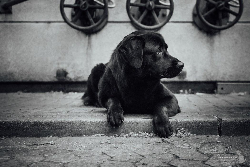 Portrait Hündin von suisui Hundefotografie