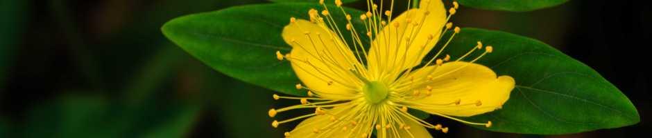 flower-940x200