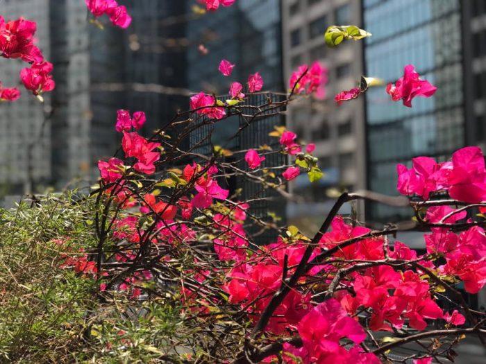 對花朵的愛要學會節制