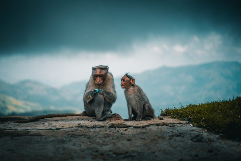Five Questions to Ask Yourself to Tame Your Monkey Mind