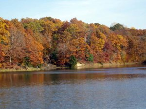 Indiana Fall