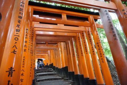Walking under the torii gates in Fushimi Inari-Taishi