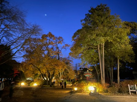 Nami Island at night