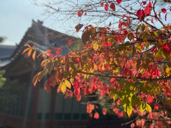 Autumn leaves with the king's sleeping chambers in the background