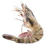 Маслянистый экстракт планктона