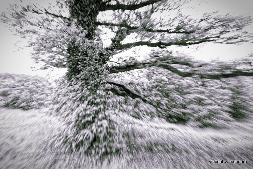 Photo: La vie secrète des arbres.