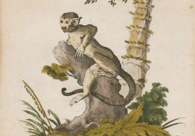 Risultati immagini per Biblioteca Bologna lo zoo di carta