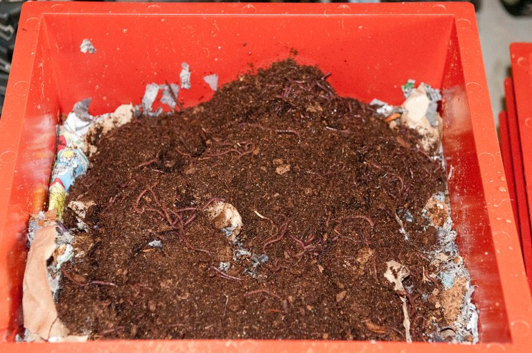 vermicomposting didn't work for me