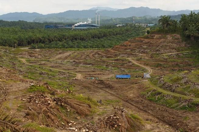 Pessoas ou empresas de óleo de palma: quem é que a União Europeia irá ouvir?