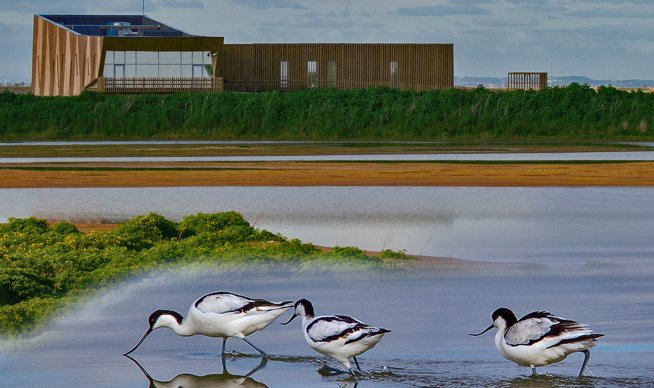Passeio ZERO e Ação de Limpeza | 21 de setembro | EVOA – Espaço de Visitação e Observação de Aves –  Vila Franca de Xira