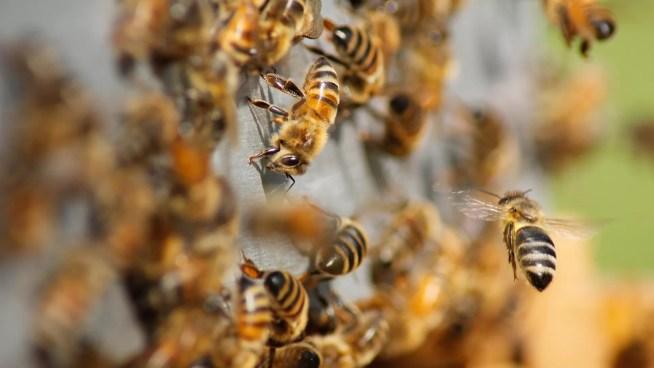 Associações alertam Governo: é altura de travar os danos do uso excessivo de pesticidas