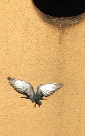 Birds 21 Photography Dnyneshwar Muley
