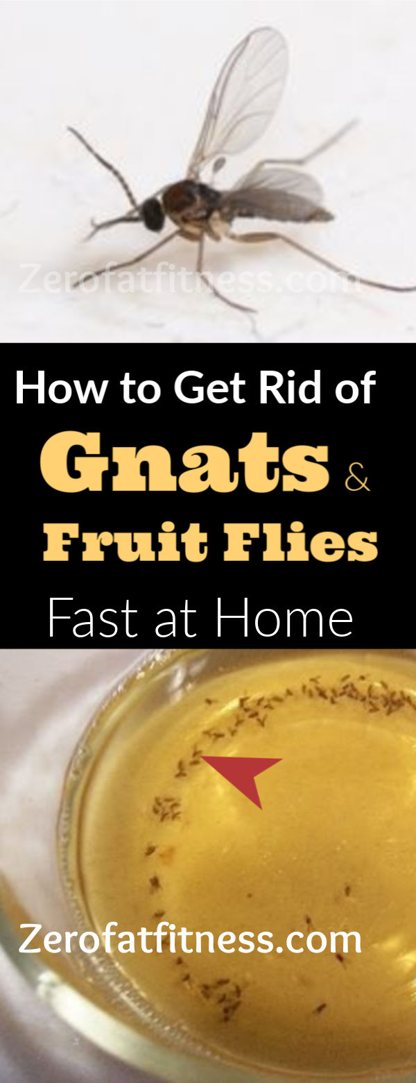 How To Get Rid Of Gnats And Fruit Flies- 12 Home Remedies