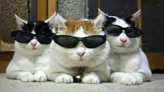 sunglasses-cats