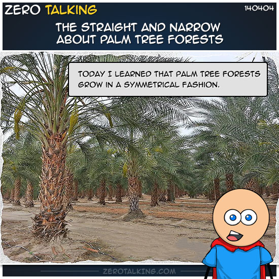 the-straight-and-narrow-about-palm-tree-forests-zero-dean