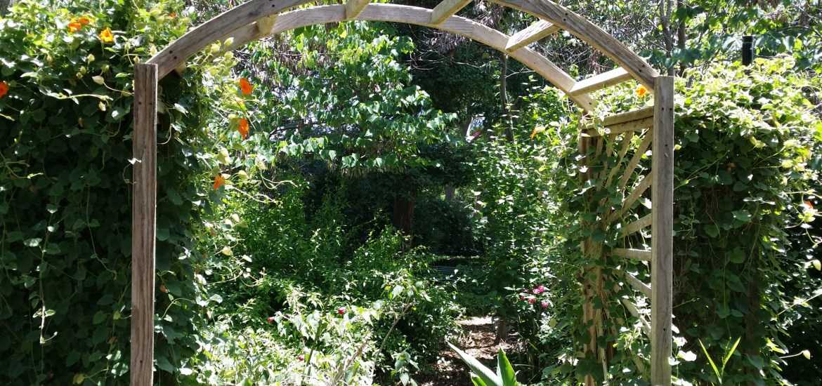 flower garden in our intentional community