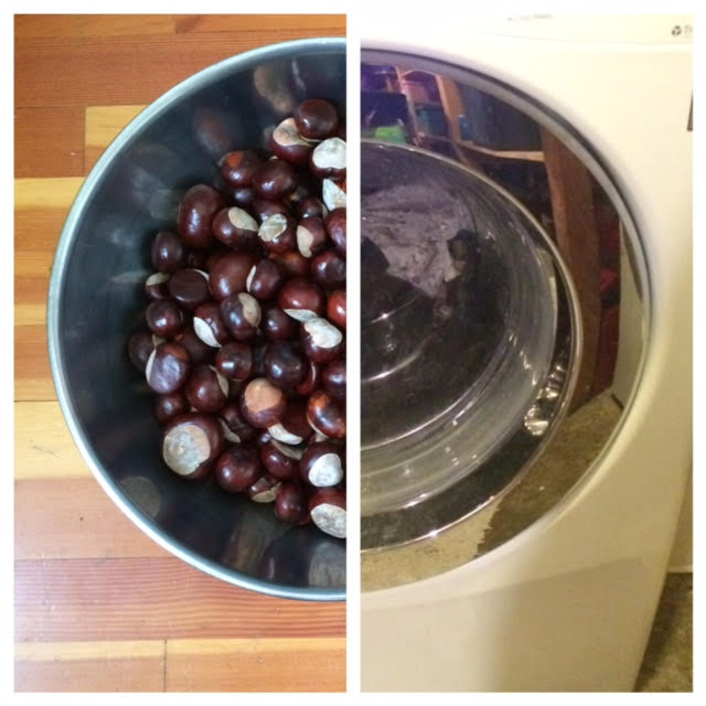 washer-and-bowl-of-chestnuts