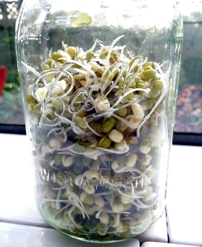 jar of mung bean sprouts