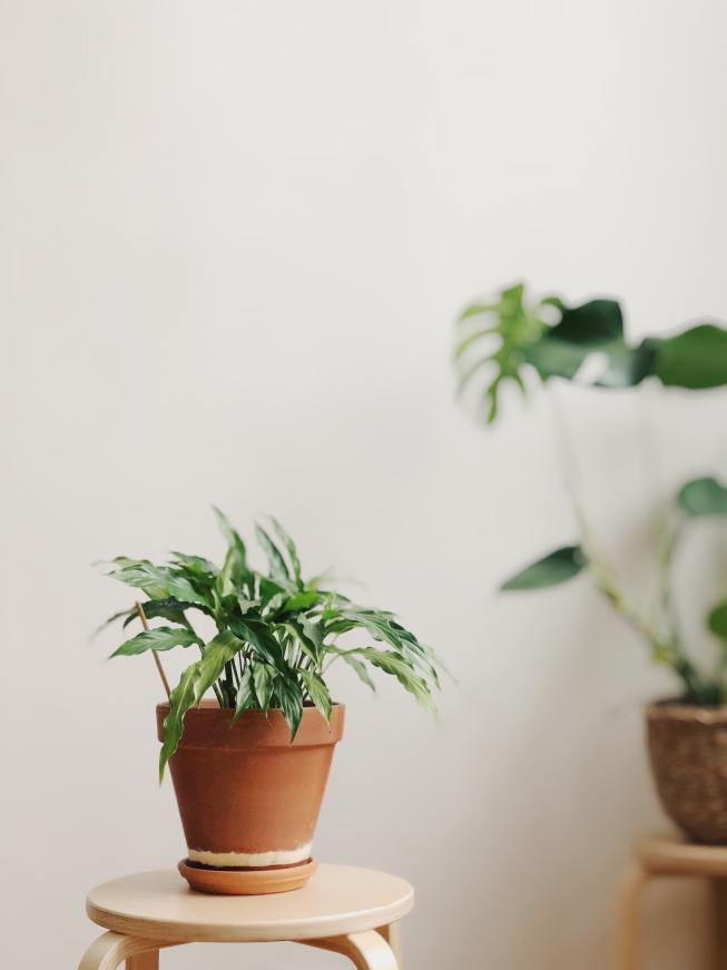 Decorate with Plants