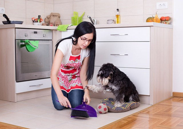 7 Tips for Keeping Your House Clean, Even If You Have a Dog