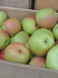 FM Apples