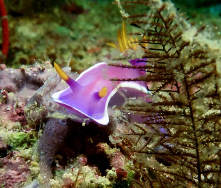 Scuba diving in philippines, Scuba diving philippines, philippines dive sites, best dive sites philippines, diving spots in the philippines