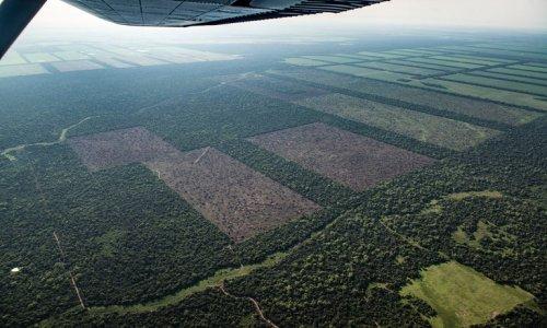 A pesar de la cuarentena,Ya se deforestaron más hectáreas que el año pasado